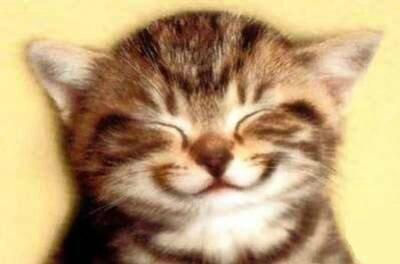 chat souri