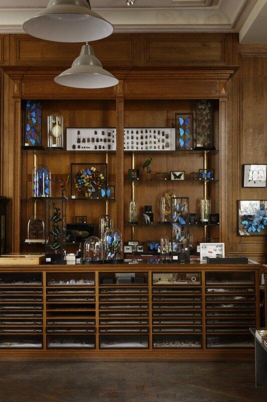 2 © Francis Hammond - Deyrolles un cabinet de curiosité parisien - Flammarion