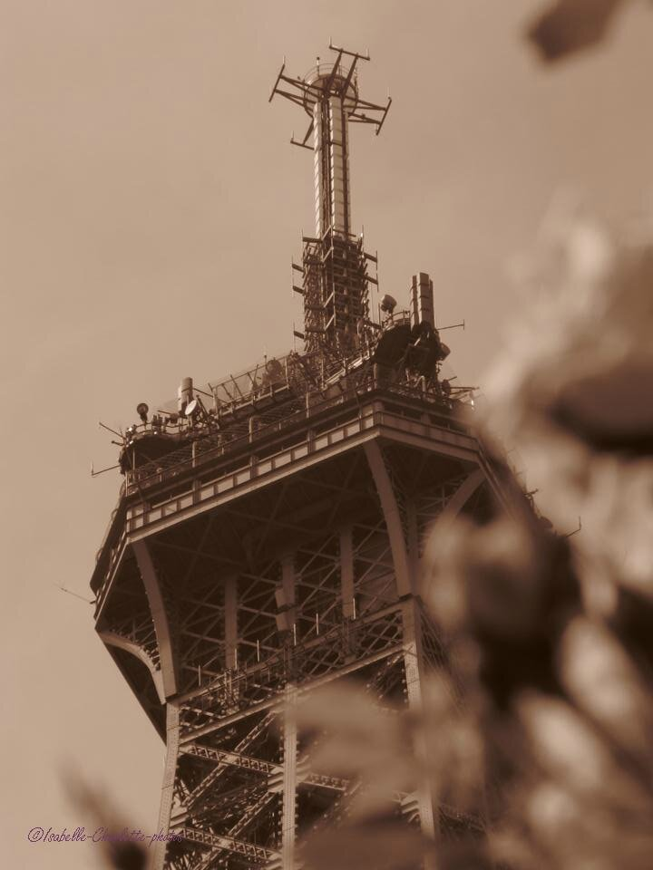 Des fleurs sous la Tour Eiffel...