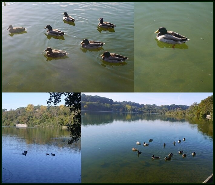 06 les canards