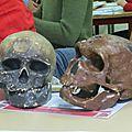 Paléontologie junior (2)