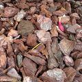 Comment entretenir l'acidité d'un sol ?
