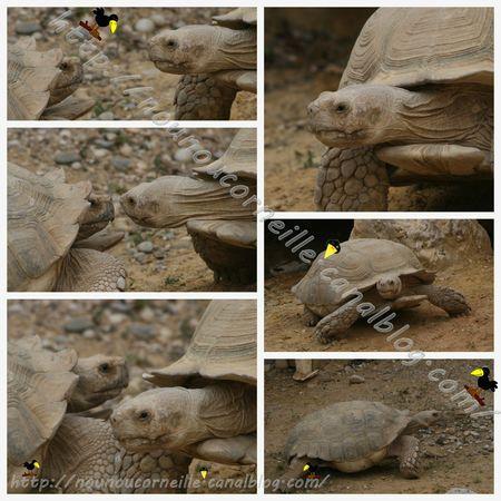 tortues ferme 3