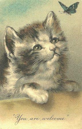Kat (2)