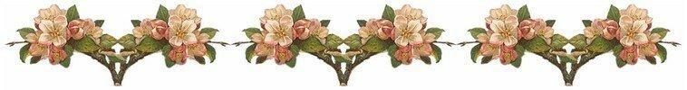 ligne_roses