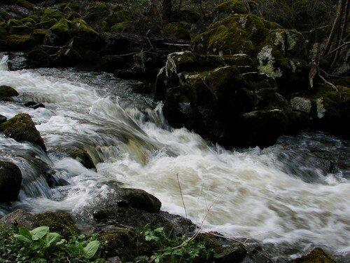 2008 04 23 Une rivère près du Chambon sur Lignon (10)