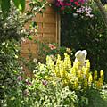 L'été dans mon jardin