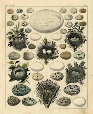 Nests-Eggs-Vintage-Print-GraphicsFairysm