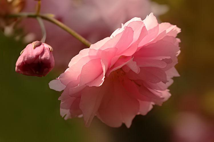 rosencor_5483