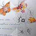 Francoise M Papillon-6