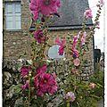 P 52 # s 20 fleurs