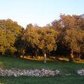 Le bucheron et l'arbre