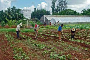 cuba+gardening