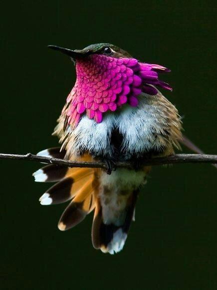 oiseau c