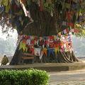 (a2) Lumbini (Népal)