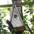 2009 06 02 Le mésange bleu qui donne a manger a ses petits dans le nichoir (6)