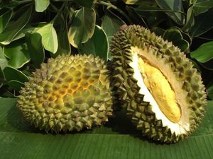 Durian[1]