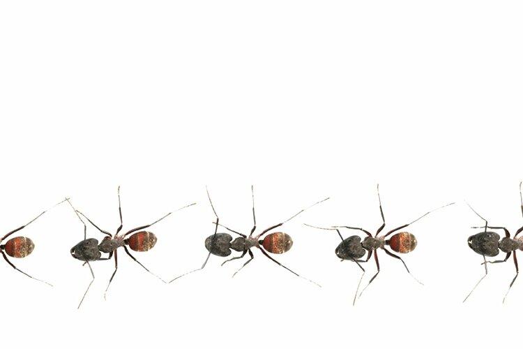 banniere-fourmis-qu-est-ce-que-c-est