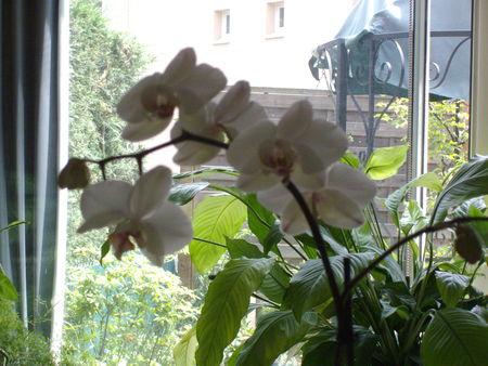 fleurs_006