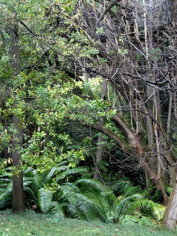 2016 02 24 Jardin botanique Lisboa - 020