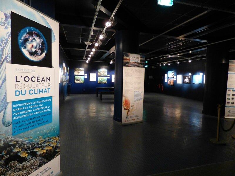 8 Aquarium Porte Dorée (14)