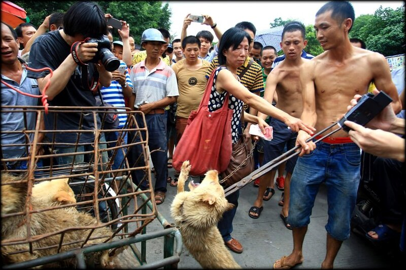 massacre_yulin_1