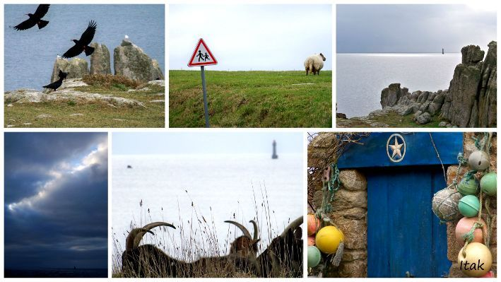 ouessant3