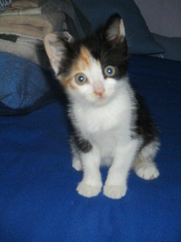 Zoé chat de Nadine M