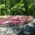 Jardin volcanique
