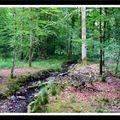 Balade en forêt d'écouves (fin)