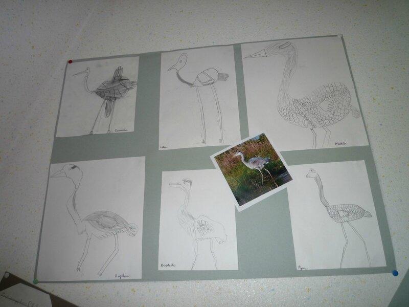 dessins-heron