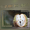 Graine de star