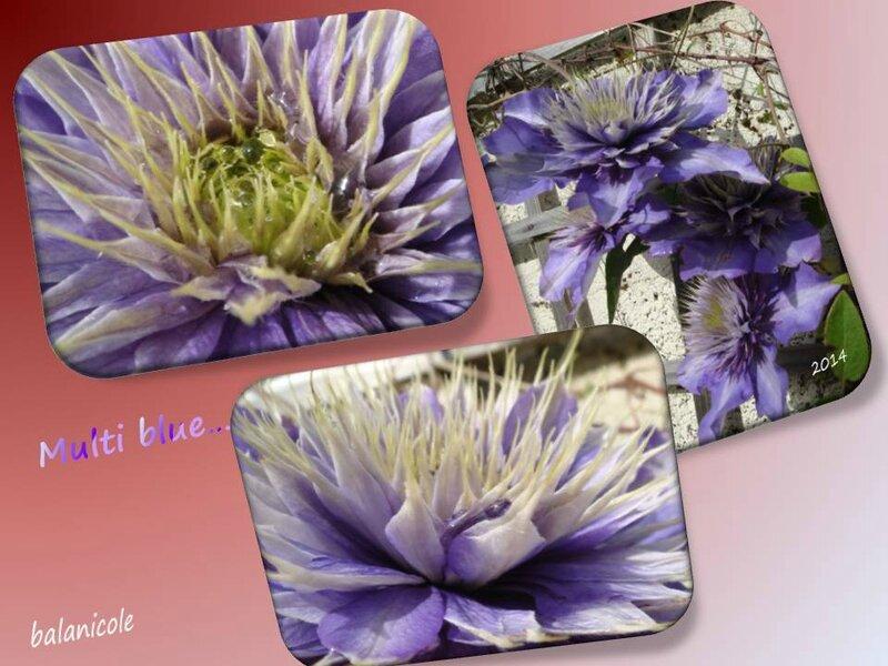 balanicole_2015_31_multi blue