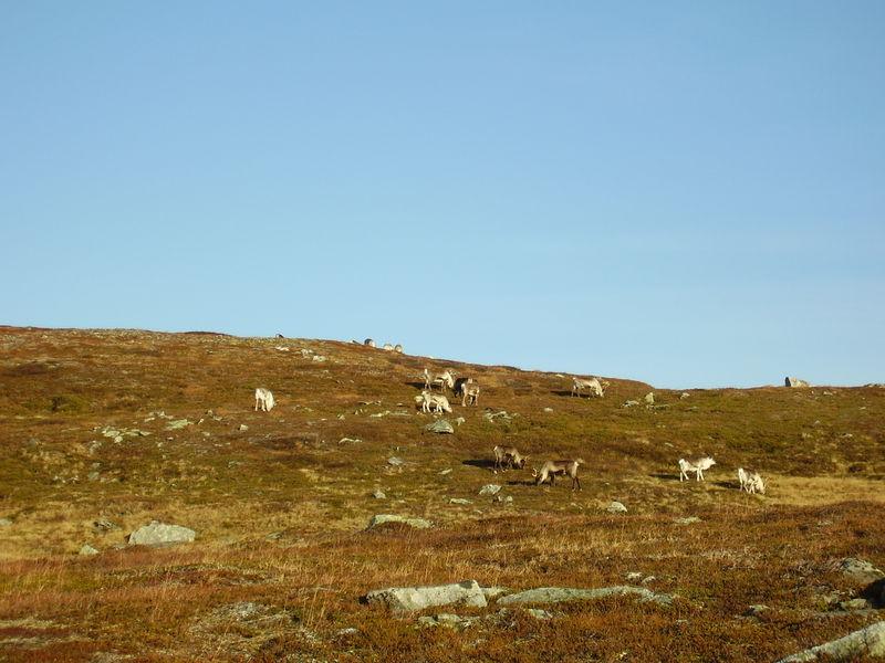 17-10-08 Sortie Montagne et rennes (029)