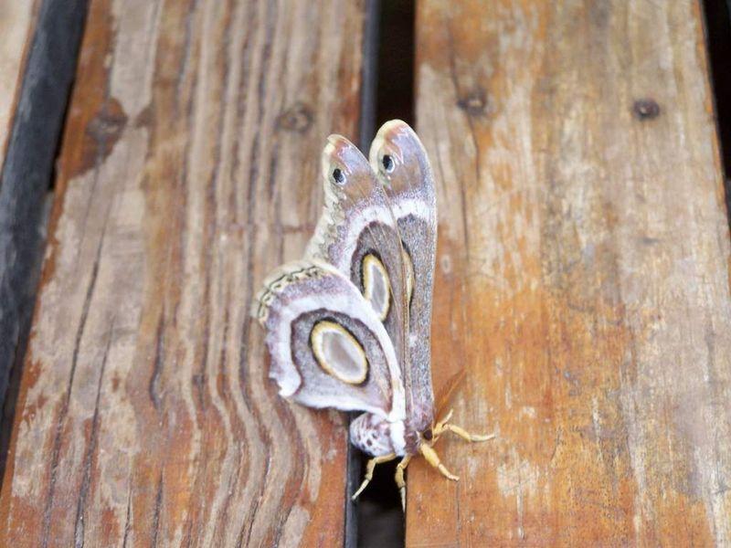 Papillon dont je connais pas le nom