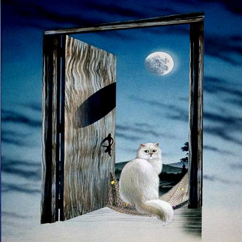 carte chat clair de lune