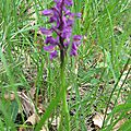 orchidées sauvages 011