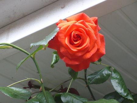 fleurs_002