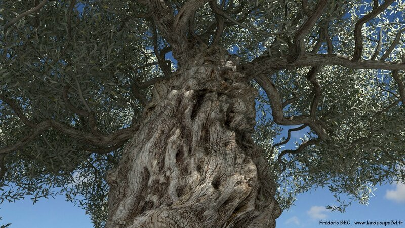 Olea europaea olive tree 3D tree plant model TPF The Plant Factory Published landscape 5