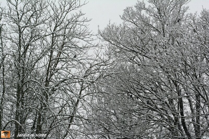Neige-Février-2018