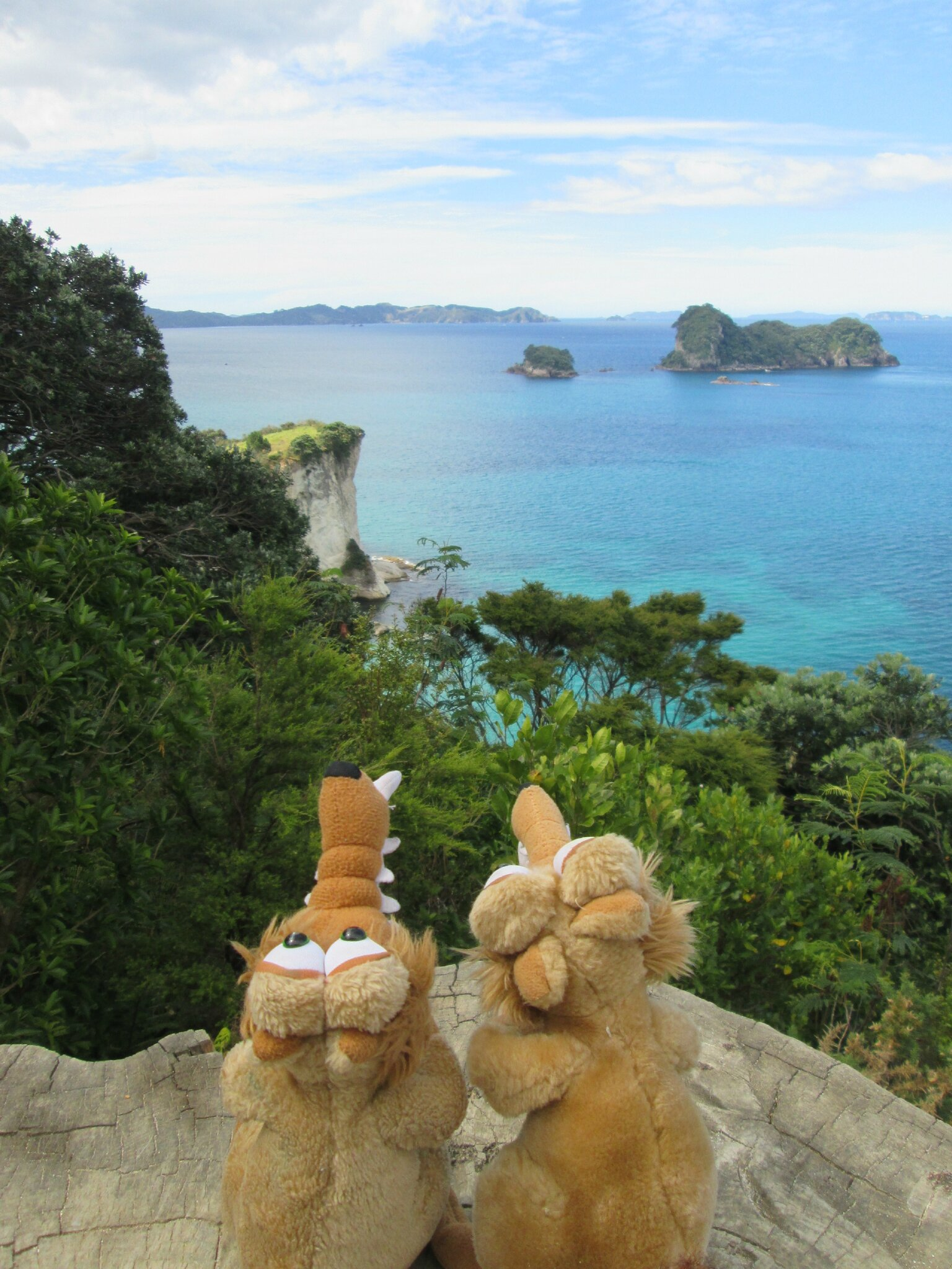Cathedral Cove (8)