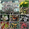 Open-Live-Writer/7173d0e711fa_EBDE/fleurs en avance_thumb