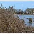Les étangs de la dombes ( département de l'ain)