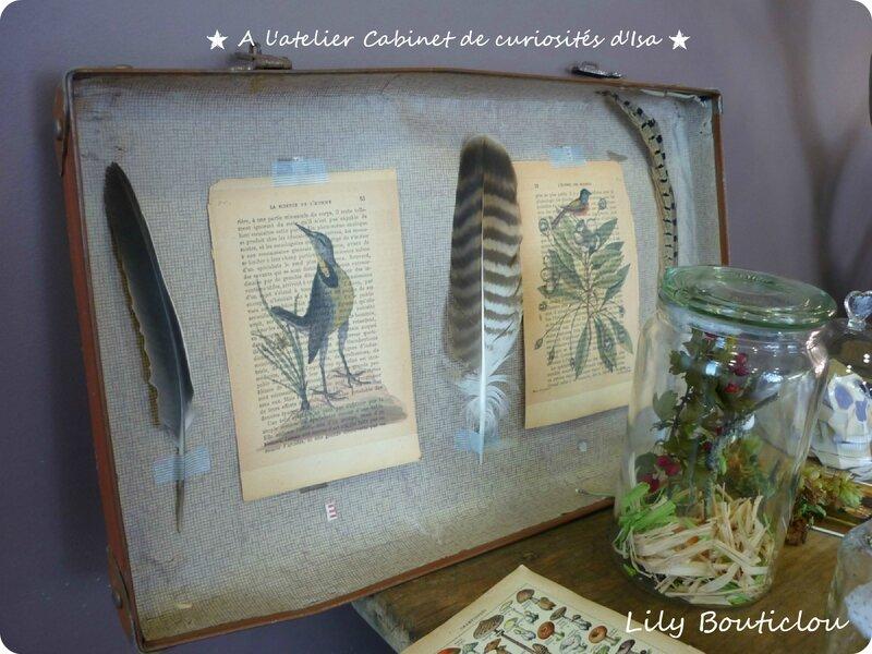 cabinet curiosités lilybouticlou