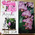 Orchidées-3