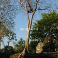 site d'angkor_ta prohm_16