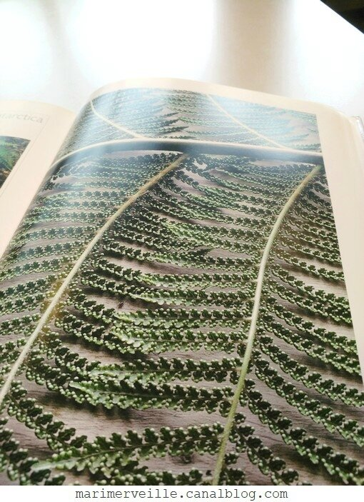 L'émouvante beauté des feuilles4- ULMER - Marimerveille