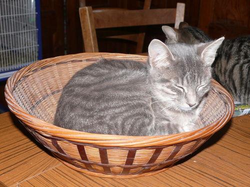 2008 10 25 Le chat dans la corbeille