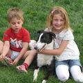 Femelle greyhound ashbury colleen