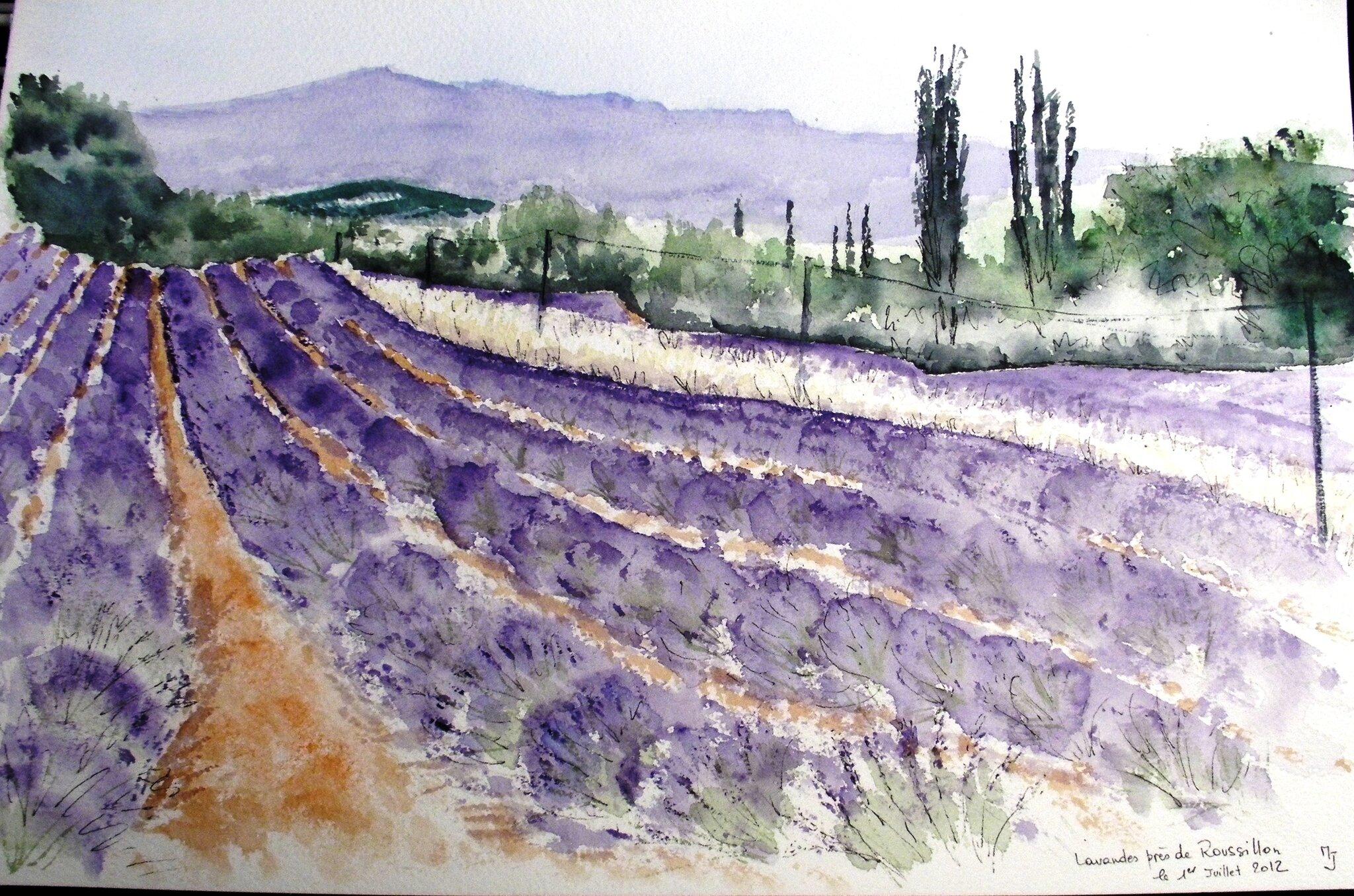 Champs de lavande près de Roussillon